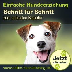 Online Hundetraining mit Johanna Esser